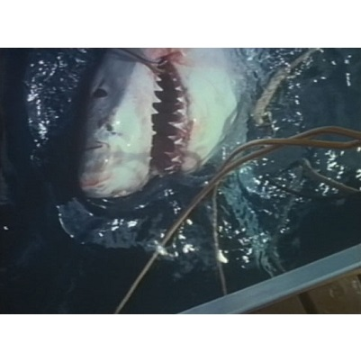 Great White Death (1981)